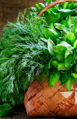 Fine herbs Mido
